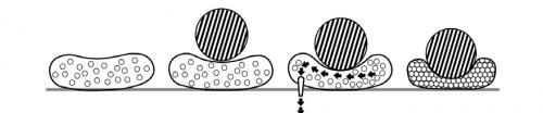 granulki